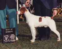 Little Jax, Brittany show win